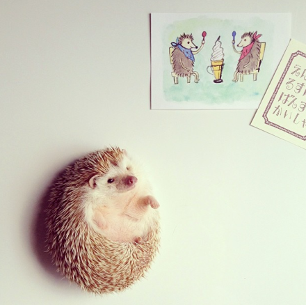 mrwonderful_darcy_the_flying_hedgehog_erizo_031