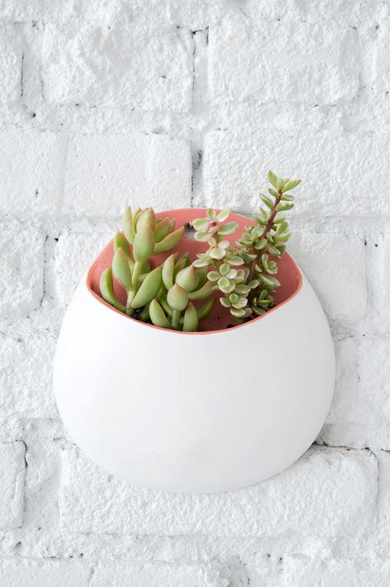 plant16